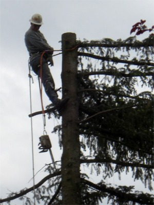 Tree Topping Service
